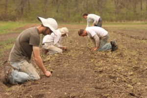 Workers at Henry's Farm pride themselves on organic farming techniques and grow 650 varieties of vegetables.